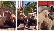 Minnoş Köpekleri ile Egzersiz Yapmayı Oldukça Eğlenceli Hale Getiren Çift