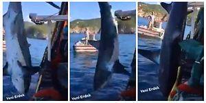 Bu Kadarı Olmaz! Köpek Balığına Tekme ve Yumruklarla Adeta İşkence Ettiler