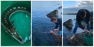 İyilik Kazanacak! Avlanması Yasak Olan Mersin Balığı Kurtarıldıktan Sonra Dönüp Teşekkür Etmeyi Unutmadı