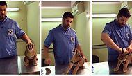 Aşı Olmamak İçin Dirense de Veterinerin Tatlı Tutumundan Sonra Razı Olan Vahşi Kedicik