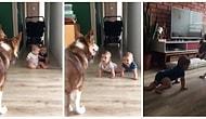 Tatlış Köpekleriyle Eğlencenin Dibine Vurup Kahkahalara Boğulan Bebekler