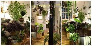 Tavandan Duvarlara Uzanan Bitkileriyle Evini Ormana Dönüştüren Adamla Tanışın