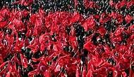 Nevşehir Valiliği, Cumhuriyet Bayramı Yürüyüşüne 'Kamu Düzenini Bozacağı' İddiasıyla İzin Vermedi