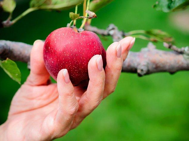 16. Yasak meyve her zaman daha tatlı gelir.