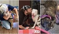 Pitbull Köpeklere Olan Ön Yargınızı Kesinlikle Yok Edecek Birbirinden Minnoş 17 Fotoğraf