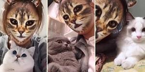 Kedi Filtresiyle Tanışan Kedilerin Efsane Tepkileri!