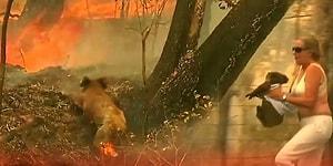 İyi İnsanlar İyi ki Varlar: Yangından Kaçarken Ormanda Mahsur Kalan Koalayı Kurtaran Güzel İnsan!