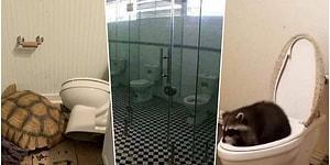 Kiminin Yaratıcılığı Sayesinde Kiminin İmkanlarından Dolayı Ortaya Çıkmış Birbirinden Tuhaf Tuvaletler
