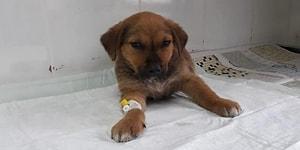 Site Bahçesinden Çıkarken Yavru Köpeği Ezmişti: Taksi Sürücüsünün İşine Son Verildi
