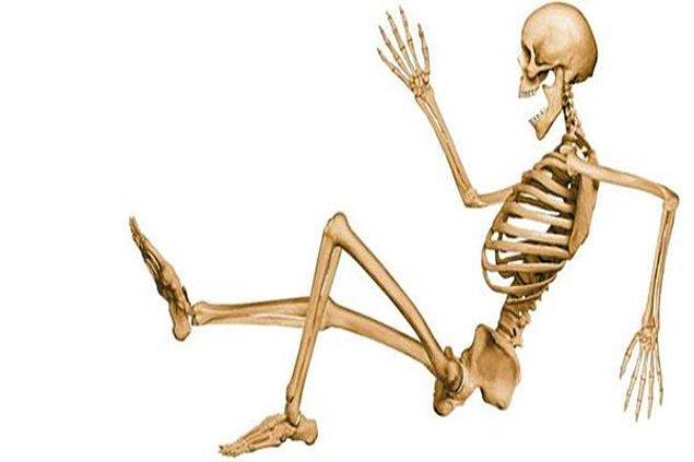 1. İnsan vücudunda kaç kemik vardır?