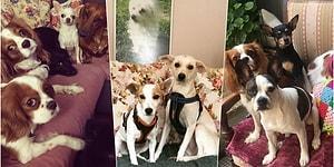 Gözlerinizden Kalpler Çıkartacak Bir Mekân: Minik Dostlara Güvenli ve Sıcak Bir Yuva Sunan Pet Palas ile Tanışın!