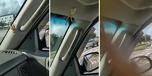 Aracın İçine Giren Kurbağanın Şoföre Hayatının En Korku Dolu Anlarını Yaşattığı Görüntüler!