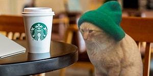 Beresiyle Tatlılığın Bütün Sınırlarını Zorlayan Kediye Yapılmış Birbirinden Komik 13 Photoshop Çalışması