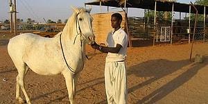 Meclis Gündemine Taşındı: Sudan'dan Getirilecek At Eti Nerede Kullanılacak?