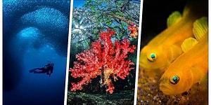 Bakmaya Doyamadık! Sekizincisi Düzenlenen Su Altı Fotoğraf Yarışmasının Kazananları