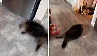 Yangın Alarmı Çalınca Evden Kaçmak İçin Depar Atan Kedinin Kaydedilen Muhteşem Görüntüleri!
