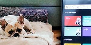 Evde Yalnız Başına Kalıp Sıkılan Can Dostlarınıza 'Spotify'dan Evcil Hayvanlar İçin Çalma Listeleri