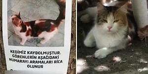 Kaybolan Kediyi İnsan Dostuna Ulaştıran Güzel İnsan ve Kedisine Kavuşan Kadının Yaşadığı Mutluluk!