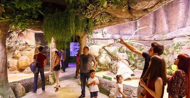 Çocuğunuzu yüzlerce canlının bir arada olduğu heyecan dolu bir gün için Jungle Park'a götürebilirsiniz. Bu eşsiz alan İSFANBUL Alışveriş ve Eğlence Merkezi'nin giriş katında sizi bekliyor olacak.