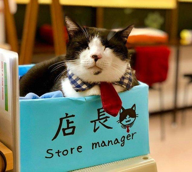 """9. """"Kyoto'daki kedi kafesini ilk ziyaret edişim. Fotoğraftaki minnoşun adı Bob."""""""