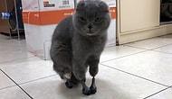 Dünyada İkinci Kez: Rusya'da Bir Kediye Daha Dört Protez Pati Takıldı