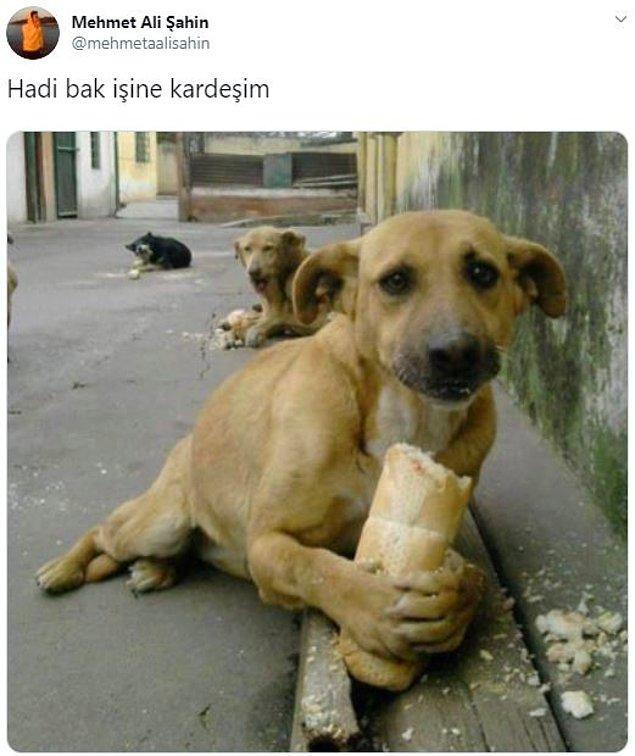 11. Ekmek yiyen masum köpek...