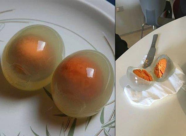 14. Hiç pişmiş bir penguen yumurtası görmüş müydünüz?