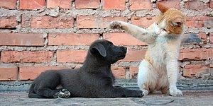 Hayvan Hakları Yasası İki Ay İçerisinde Meclis'te: Sokağa Bırakana 10 Bin TL'ye Kadar Ceza