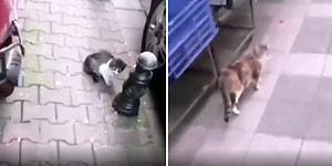 İşe Giderken Karşısına Çıkan Kedilere Günaydın Diyen Adam ve Aldığı Cevaplar!