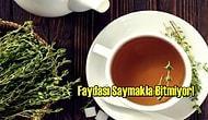 Her Derde Deva Olan Kekik Çayı Neye İyi Gelir, Faydaları Nelerdir?
