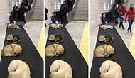 Isınmak İçin Marmaray'a Sığınan Köpeklerin Oluşturdukları Görüntü!