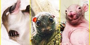 Hayvanlar Aleminde Çok Bilinmeyen Dostlarımızın Dünyalar Tatlısı Yavrularından İç Isıtan 22 Fotoğraf
