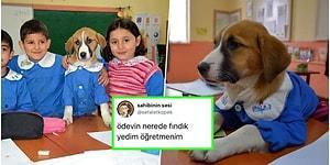 Mavi Önlüğüyle Okula Başlayan Fındık Köpeği Şakalarına Katarak Tatlı Tatlı Güldüren 21 Kişi
