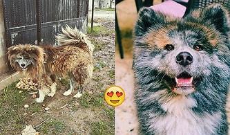 Bacağından Tüfekle Vurulmuş Halde Kuru Ekmek Yerken Bulunan Sokak Köpeği Naru'nun Kurtulma Hikayesi