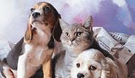 Hayvan, İnsan ve Çevre Konularına Duyarlıysanız Dikkat! Emniyet'e Göre Terörist Olmaya Yatkınsınız