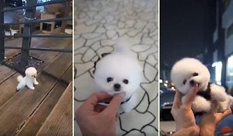 Dünya Tatlısı Minik Köpeğin İzlerken Ekranı Mıncırmak İsteyeceğiniz Görüntüleri!