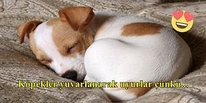 Köpeklerle İlgili Muhtemelen Şimdiye Kadar Duymadığınız İlginç Bilgiler