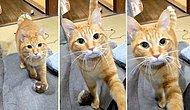 Oyun Oynamak İçin İnsan Dostunu Darlayan Kedinin Aşırı Tatlı Görüntüleri!