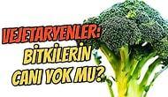 Bitkilerin de Canı Var! Madem Canlıları Koruyorlar, Vejetaryenler Neden Hayvanları Yemiyor da Bitkileri Yiyor?