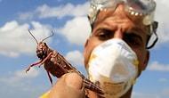 İran'ı İstila Eden Çekirge, Hakkari'de Görüldü: 'Havaların Soğuk Olması İstilayı Önledi'
