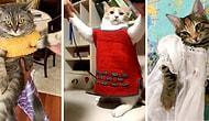 Bebeklik Kıyafetlerini Kedilerine Giydiren İnsanlardan Gelen Hepimizi Pamuk Gibi Yapacak Birbirinden Minnoş 13 Kare