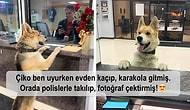 Normalde Uslu Duran Köpeklerin Yaramazlığa Karşı Koyamayıp Komik Anlar Ortaya Çıkardığı 18 Kare