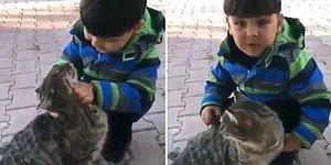 Kediyi Sevmelere Doyamayan Ufaklık: 'Ben de Büyüyünce Kedi Olcam'