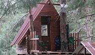 Manisa'da 3 Arkadaş Ağaç Üstüne Yaptıkları Evde Kendilerini Karantinaya Aldı: 'Tehlike Geçene Kadar Buradayız'