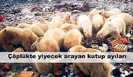 Biz Doğa Anayı ve Gezegenemizi Harap Ettikçe Bedel Ödemek Zorunda Kalan 16 Masum Hayvan