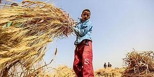 Çalışan Gençler ve Mevsimlik Tarım İşçileri Sokağa Çıkma Yasağından Muaf Tutulacak