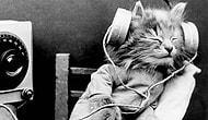 Spotify'da Mutlaka Takip Etmeniz Gereken 11 Çalma Listesi