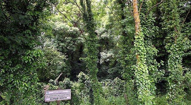 Samsun / Hacıosman ormanı