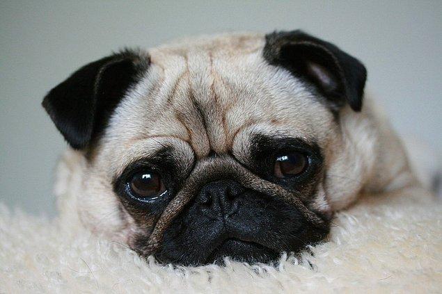 13. Bir insan yılı, yedi köpek yılına eşit değildir.