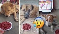 Sokak Köpeklerine Mama Dağıtan Güzel İnsanın Kaydettiği Görüntüleri İzlerken Duygu Dolu Anlar Yaşayacaksınız